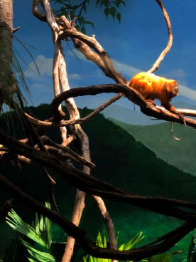Golden Lion Tamarin running through the trees.